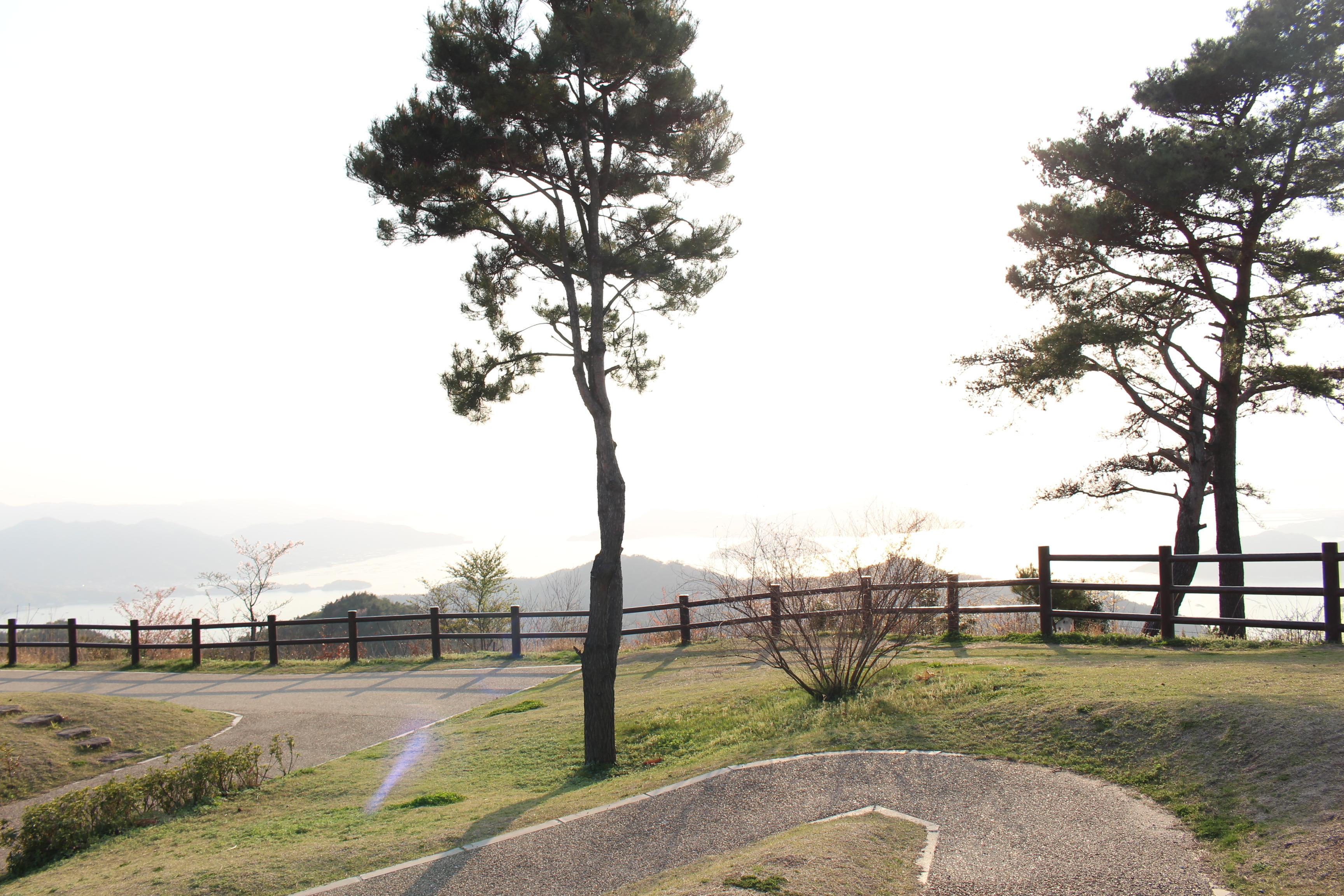 絵下山公園の木